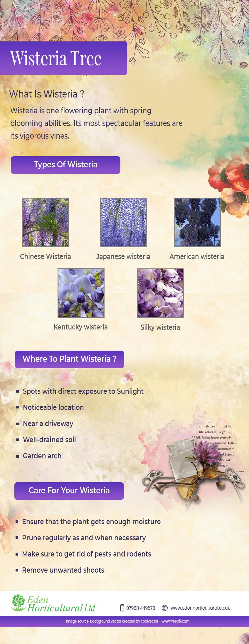 Wisteria tree infographic