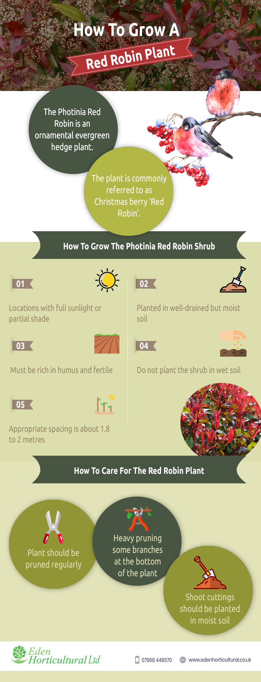 How-To-Grow-A-Red-Robin-Plant--info