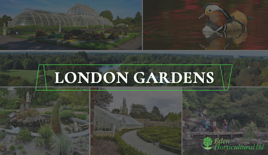 Top 10 London Gardens To Visit