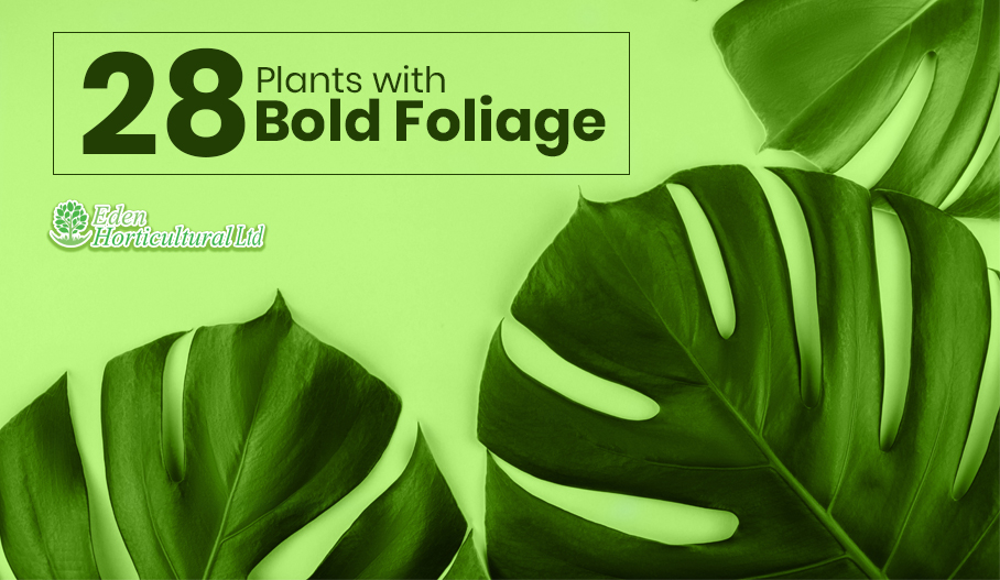 Plants for Large Gardens – 28 Plants with Bold Foliage