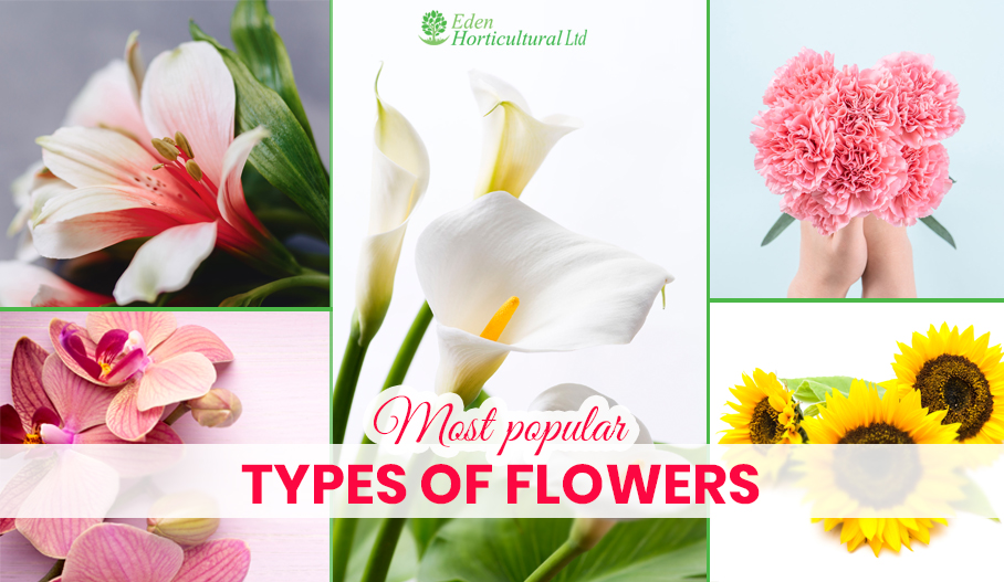 Most Popular Types of Flowers