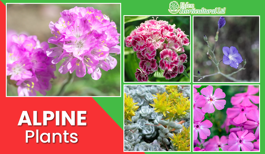 10 Different Alpine Plants to Grow