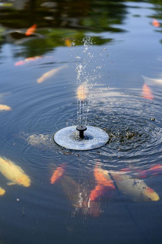 Small Solar Fountain